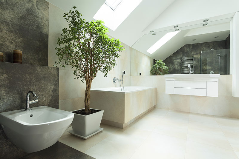 bathroom-plant
